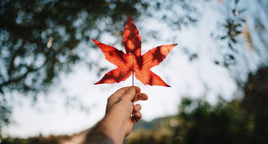 NHỮNG ĐIỀU BẠN NHẤT ĐỊNH PHẢI BIẾT TRONG VĂN HÓA ĐỜI SỐNG TẠI CANADA
