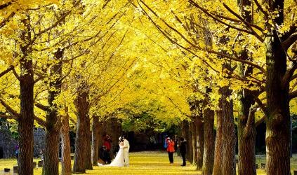 Du lịch Hàn Quốc mùa thu: nên đi đâu, làm gì?